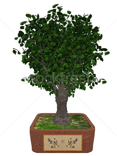 Gingko biloba tree bonsai - 3D render Stock photo © Elenarts