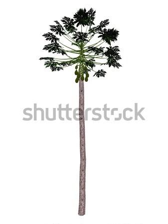 Papaya tree - 3D render Stock photo © Elenarts