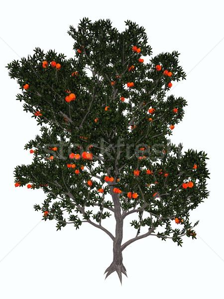 Pomegranate tree - 3D render Stock photo © Elenarts
