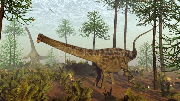 Diplodocus dinosaurs among araucaria trees - 3D render Stock photo © Elenarts