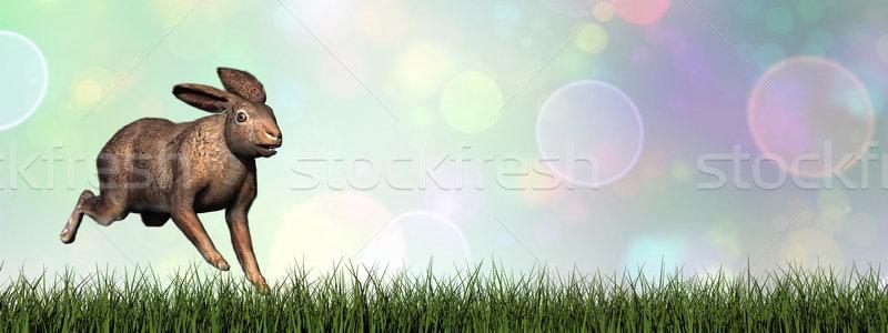 работает заяц 3d визуализации зеленая трава bokeh трава Сток-фото © Elenarts