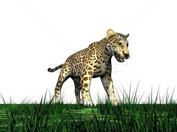 Panther трава Постоянный зеленая трава белый глазах Сток-фото © Elenarts