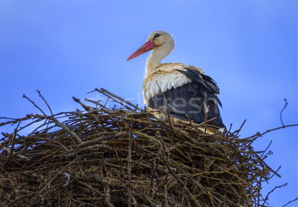европейский белый аистов гнезда Постоянный небе Сток-фото © Elenarts
