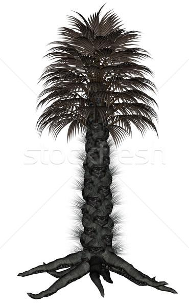 Pálmafa pálmafa 3d render izolált fehér tengerpart Stock fotó © Elenarts