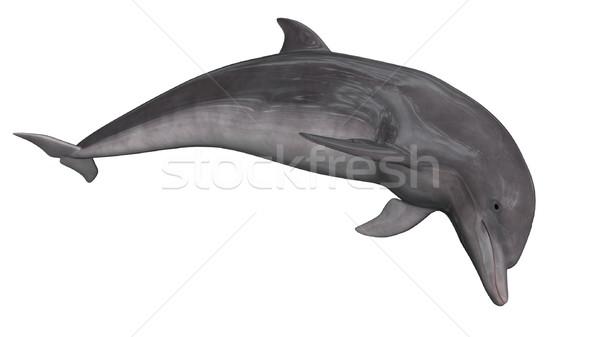 Delfin 3d render izolált fehér víz tenger Stock fotó © Elenarts
