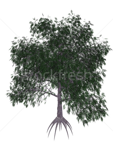 Pecan tree - 3D render Stock photo © Elenarts