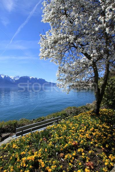 Bahar göl İsviçre sarı çiçekler Stok fotoğraf © Elenarts