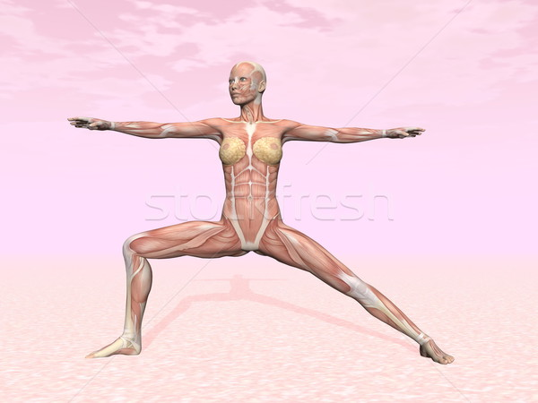 Warrior yoga pose for woman with muscle visible Stock photo © Elenarts