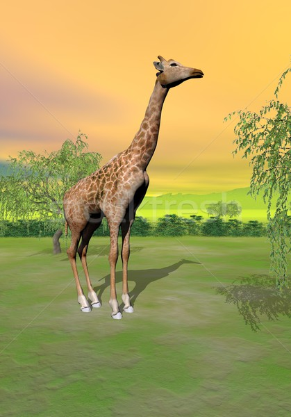Giraffe in the savannah - 3D render Stock photo © Elenarts