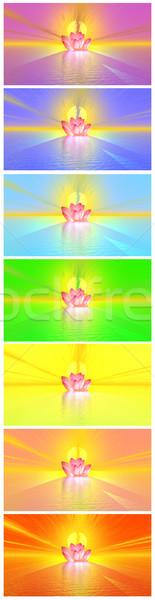Chakra couleurs Lily fleur onu Rainbow Photo stock © Elenarts