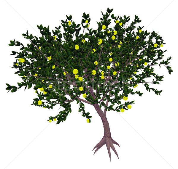 мексиканских ключевые извести дерево 3d визуализации цитрусовые Сток-фото © Elenarts