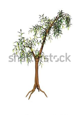 Acacia tree Stock photo © Elenarts