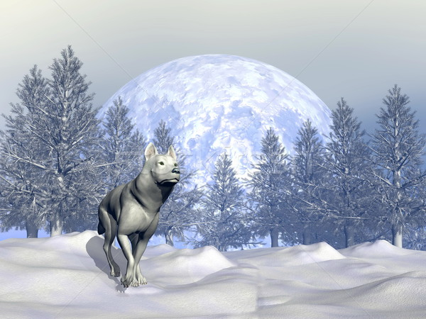 Wolf in winter - 3D render Stock photo © Elenarts