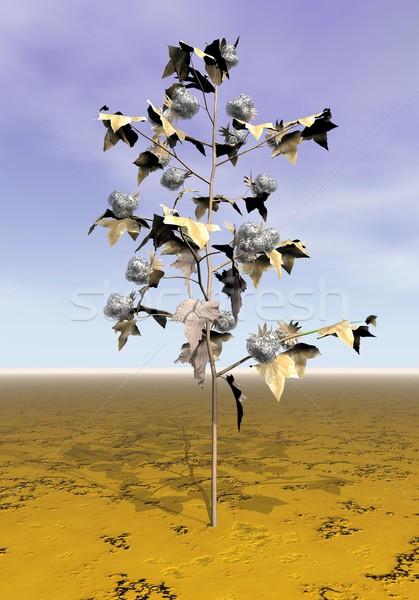 Olgun pamuk bitki 3d render bir zemin Stok fotoğraf © Elenarts