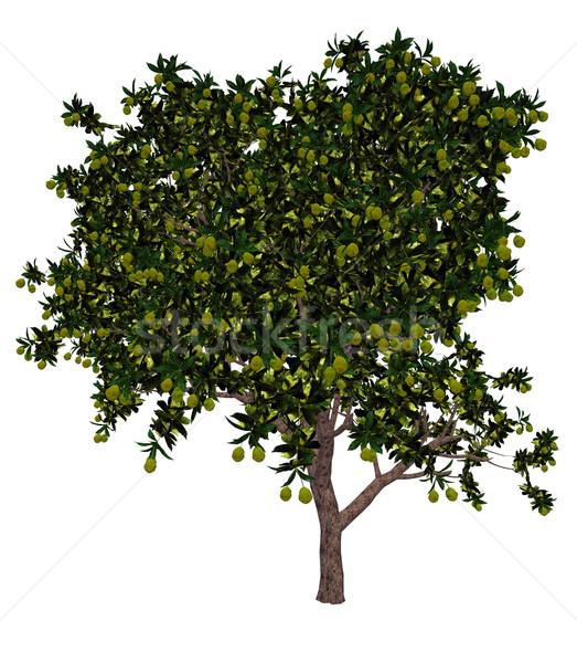Manga árvore 3d render isolado branco fruto Foto stock © Elenarts