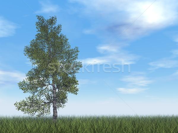 Kâğıt huş ağacı ağaç 3d render gün çim Stok fotoğraf © Elenarts
