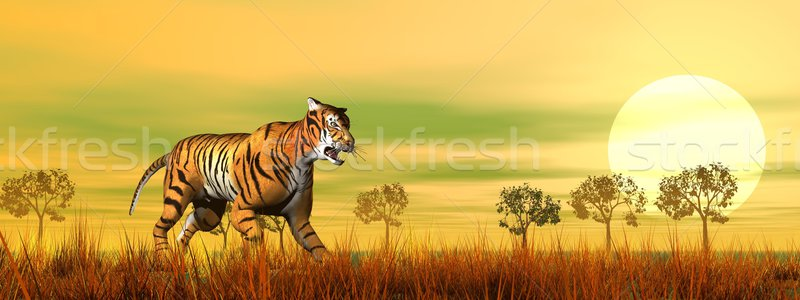 Tiger walking in the savannah - 3D render Stock photo © Elenarts