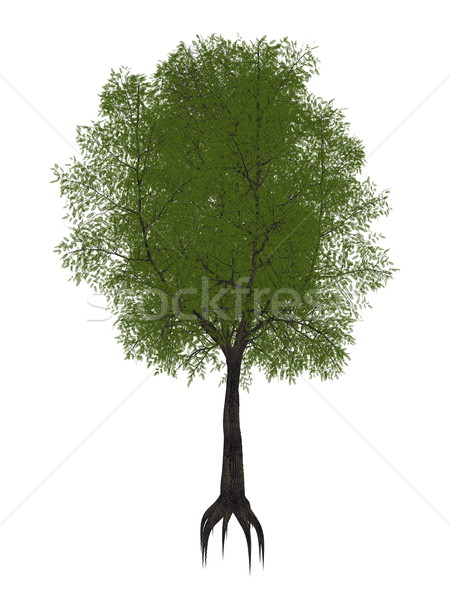 Tamarind tree, tamarindus indica - 3D render Stock photo © Elenarts