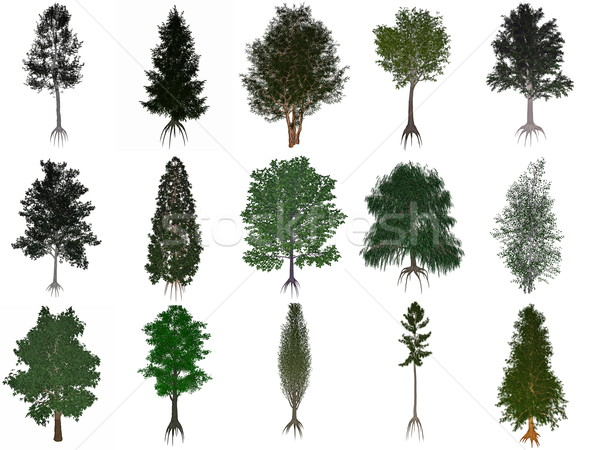 Set or collection of common trees - 3D render Stock photo © Elenarts