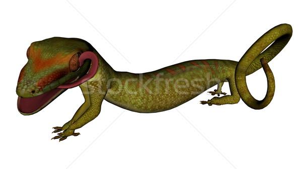 Gekon jaszczurka język odizolowany biały tle Zdjęcia stock © Elenarts