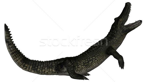 Caiman roaring - 3D render Stock photo © Elenarts