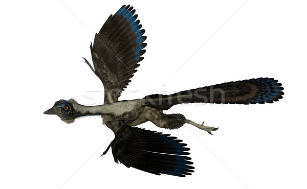 Vogel dinosaurus vliegen 3d render geïsoleerd witte Stockfoto © Elenarts