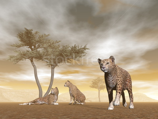 Jaguars in the savannah - 3D render Stock photo © Elenarts