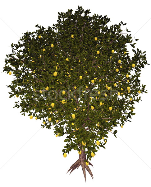 Lemon tree - 3D render Stock photo © Elenarts