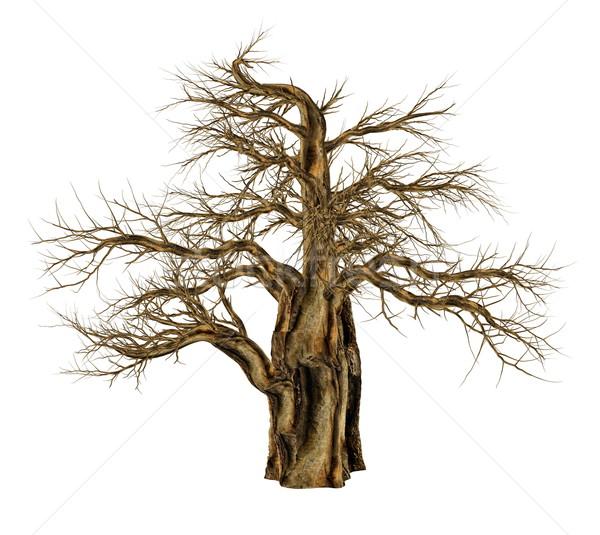 Stok fotoğraf: Ağaç · yaprakları · 3d · render · yalıtılmış · beyaz · manzara