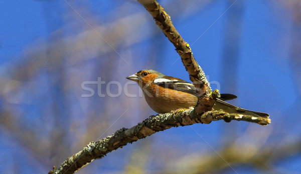 мужчины птица дерево природы зима Сток-фото © Elenarts