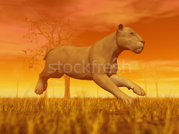 Lioness running Stock photo © Elenarts