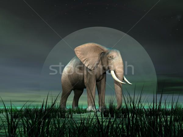 Elefante luar grande elefante africano em pé grama verde Foto stock © Elenarts