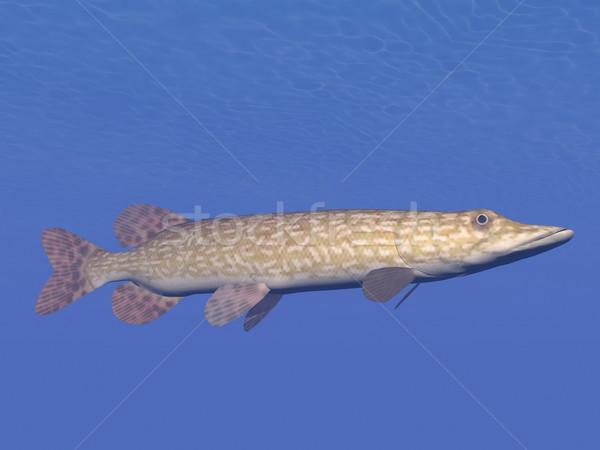 Peces subacuático 3d uno natación Foto stock © Elenarts