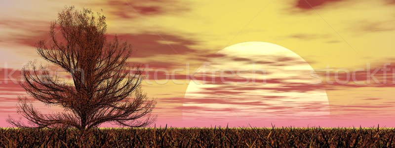 Oak tree at sunset - 3D render Stock photo © Elenarts