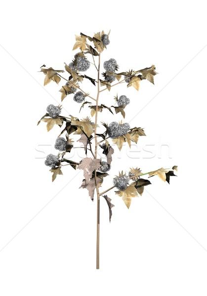 Mature cotton plant - 3D render Stock photo © Elenarts
