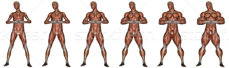 Becoming a muscular man - 3D render Stock photo © Elenarts