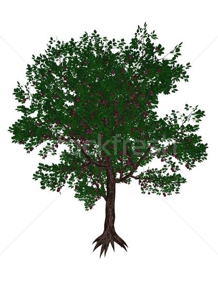 Plum tree - 3D render Stock photo © Elenarts