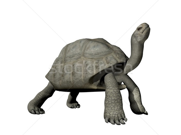 Galapagos tortoise - 3D render Stock photo © Elenarts