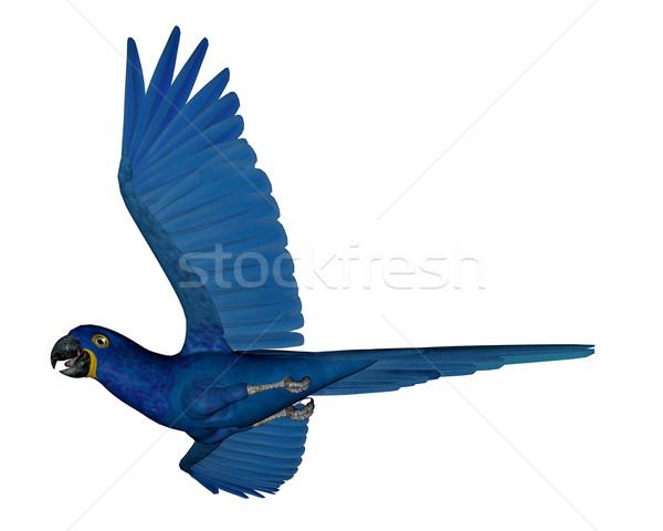 Jácint papagáj repülés 3d render izolált fehér Stock fotó © Elenarts