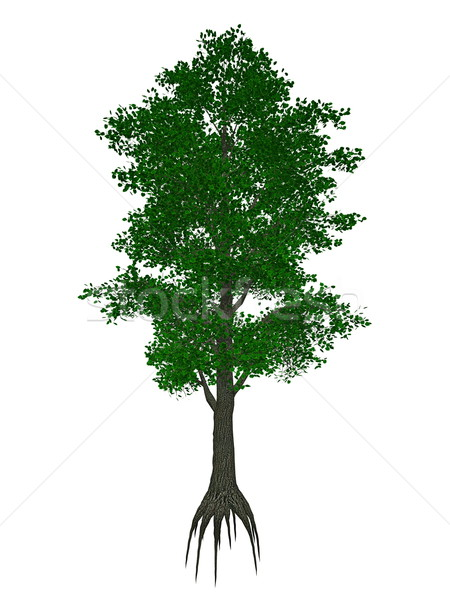Small-leaved lime or little-leaf linden, tilia cordata tree - 3D render Stock photo © Elenarts