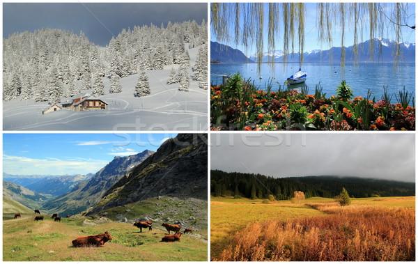 Cztery pory roku kolaż krajobraz wiosną lata jesienią Zdjęcia stock © Elenarts