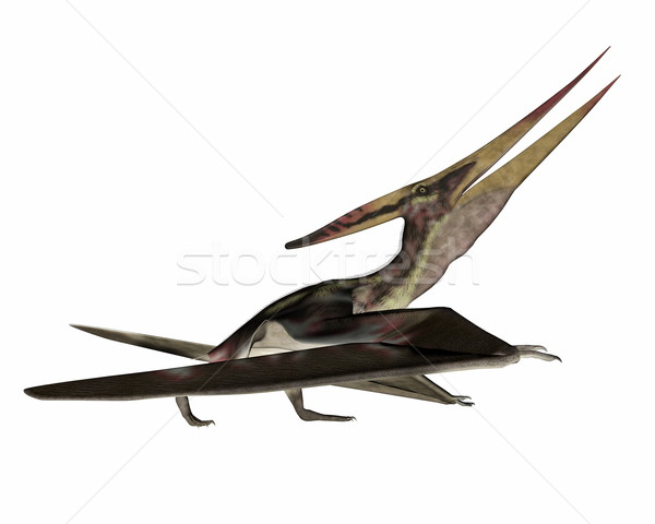 Pteranodon walking - 3D render Stock photo © Elenarts