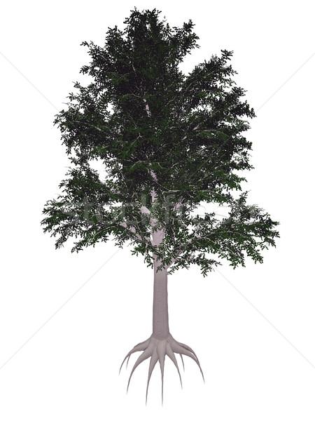 European or common beech, fagus sylvatica tree - 3D render Stock photo © Elenarts