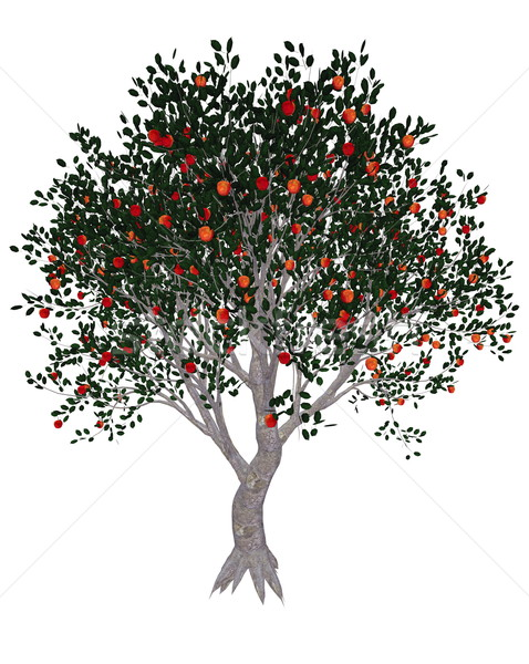 Apple tree - 3D render Stock photo © Elenarts
