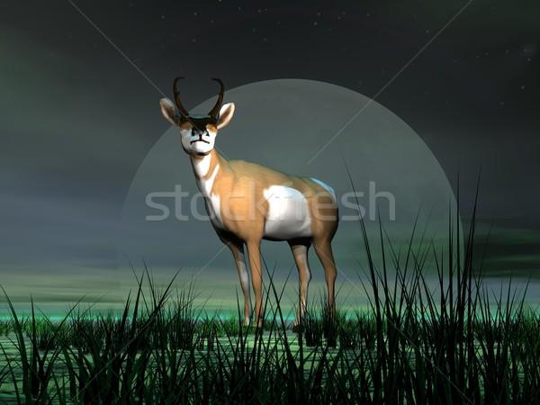 Pronghorn antelope and moonlight Stock photo © Elenarts
