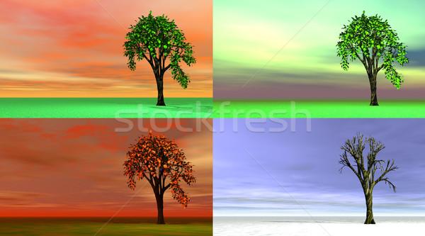Négy évszak fák négy fa tavasz fű Stock fotó © Elenarts