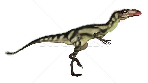 Dilong dinosaur walking - 3D render Stock photo © Elenarts