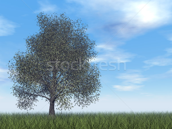 American beech tree - 3D render Stock photo © Elenarts
