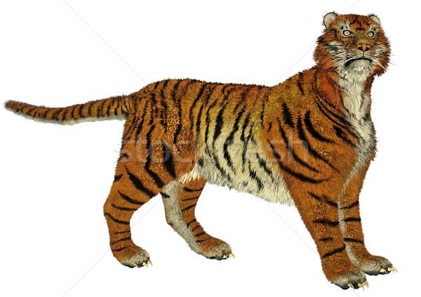 Tiger standing Stock photo © Elenarts