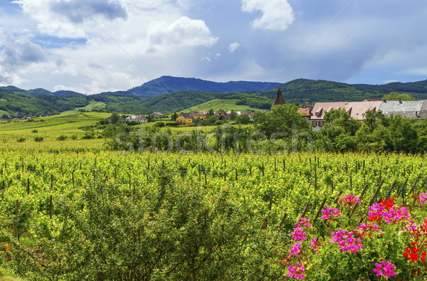 Alsace landscape, France Stock photo © Elenarts